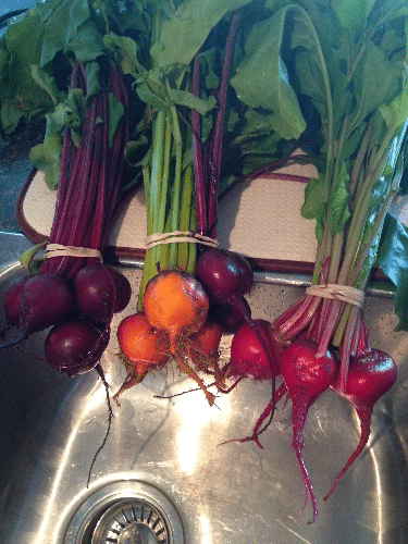 threekindsofbeets
